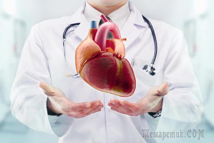 В сердце не три клапана а два