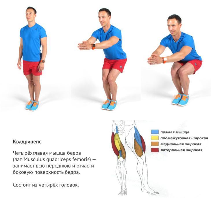 Приседаниях с узкой постановкой ног (для дополнительной проработки квадрицепсов);