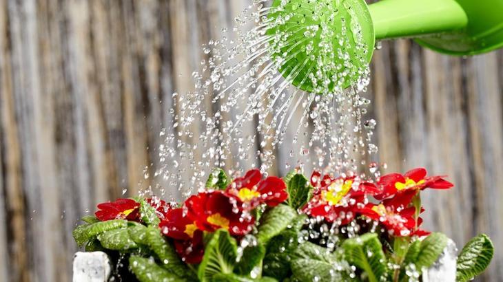 Какой водой поливать комнатные цветы?