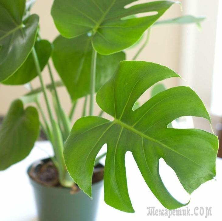 21 растение, которому достаточно мало света