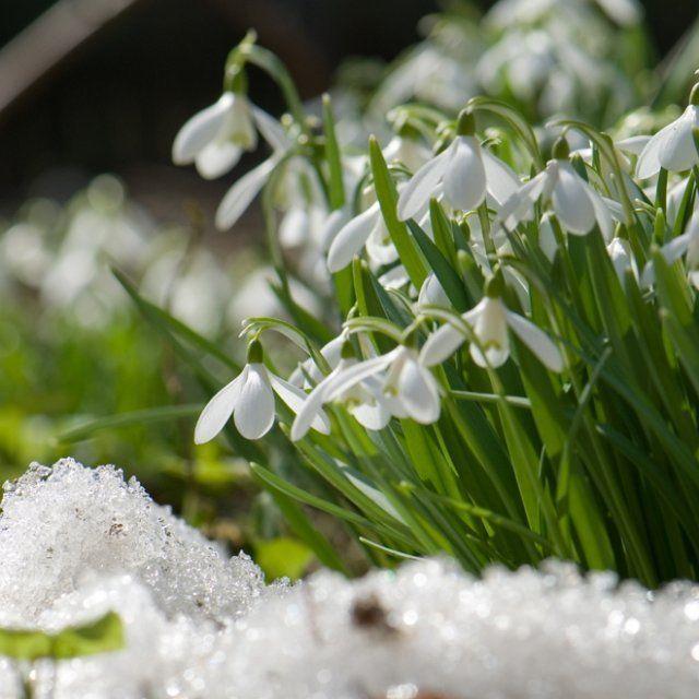 печать красивые весенние фото март вид съемки
