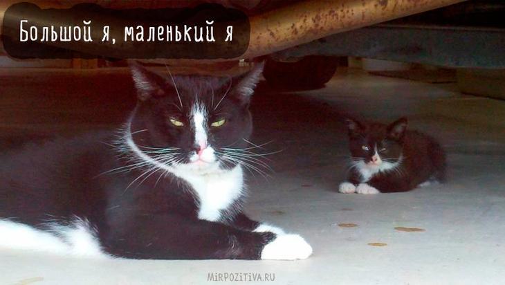 большой и маленький кот похожи