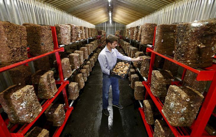 Этот бывший бункер швейцарской армии недалеко от города Эрстфельд сейчас используется для выращивания грибов, 29 августа 2015. (Фото Arnd Wiegmann | Reuters)