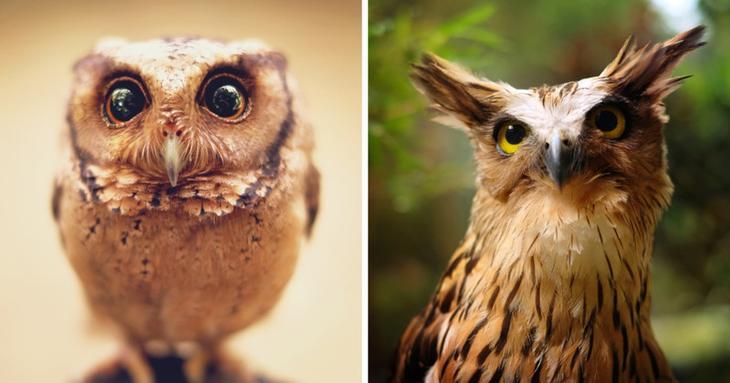 19 гипнотически красивых сов, пойманных в объектив фотографа