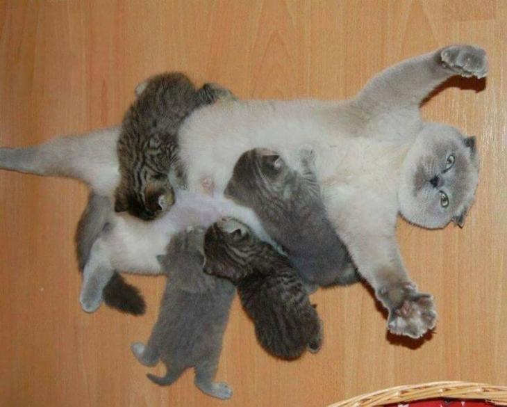 Гордые мамы-кошки, кошки со своими котятами