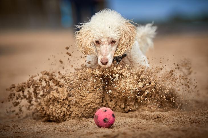 Победители фотоконкурса Dog Photographer of the Year 2018 8