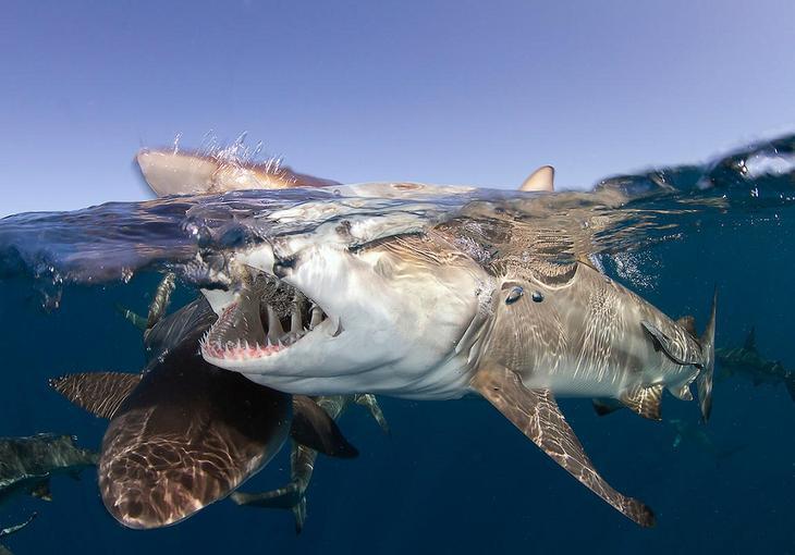 Хищный мир океана во всей красе. Фото