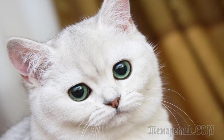 Котик (Стих)
