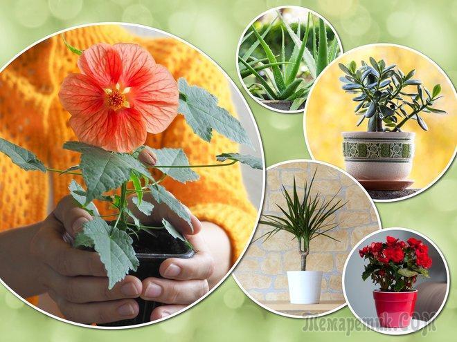 15 неприхотливых комнатных растений для самых занятых цветоводов