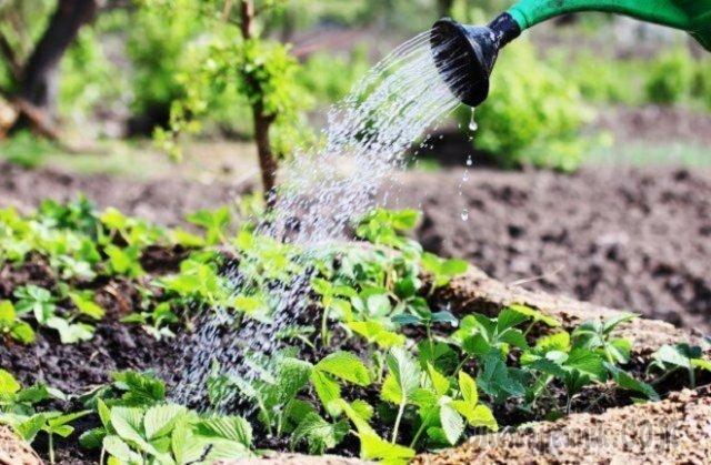 Хелат меди для растений и его применение