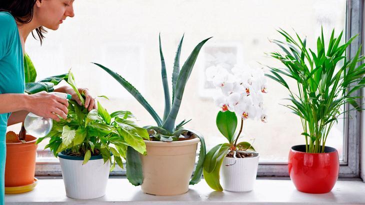 Лечебные комнатные растения