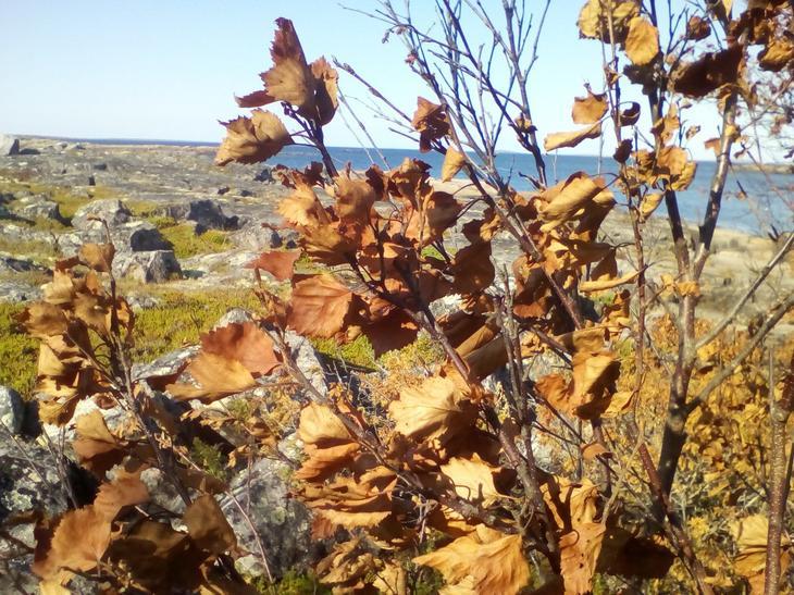 «Исчезли даже поганки и мухоморы». Что произошло в Карелии после взрыва под Северодвинском