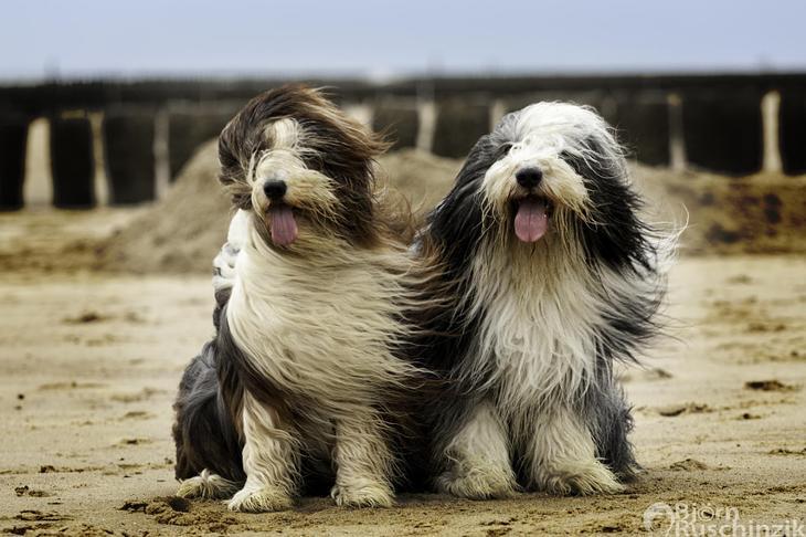 Фотографии собак - 8