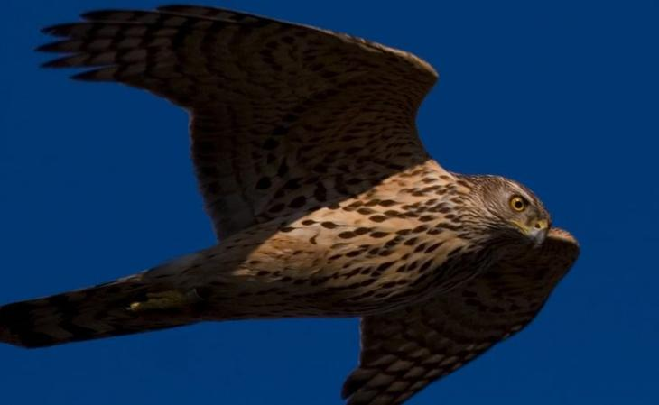 Самые опасные птицы в мире