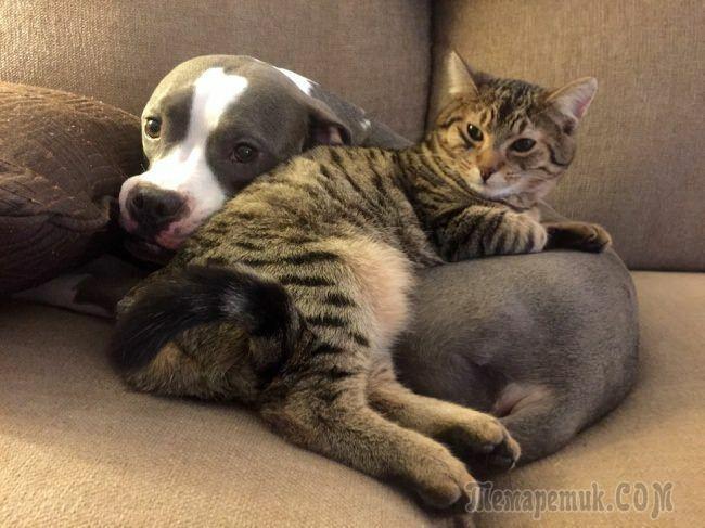 Доказательства, что каждой кошке нужна своя собака