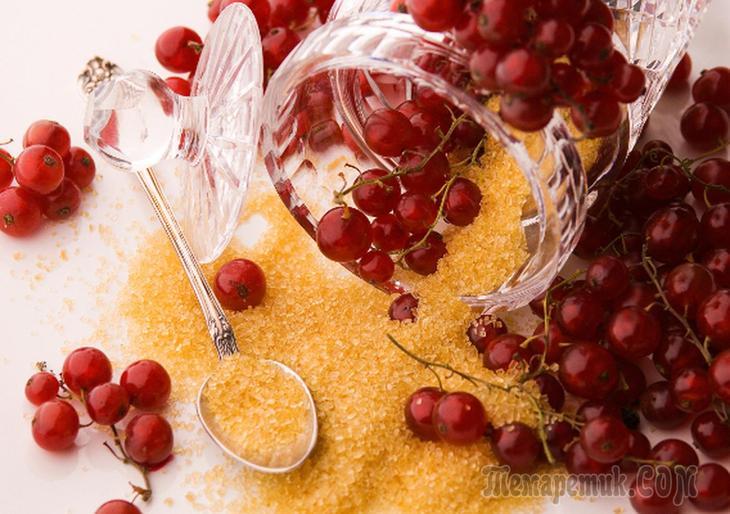 Возможно ли лечение поноса ягодами черной смородины