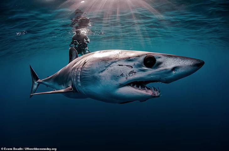 Конкурс 2021: Всемирный день океанов