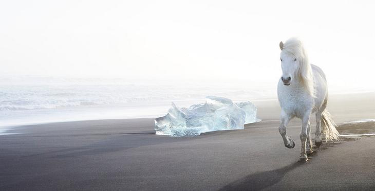 loshadi-Islandii-fotograf-Dryu-Doggett 7
