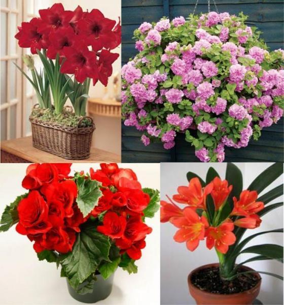 Растения, предпочитающие тень - украшаем подоконники северных окон