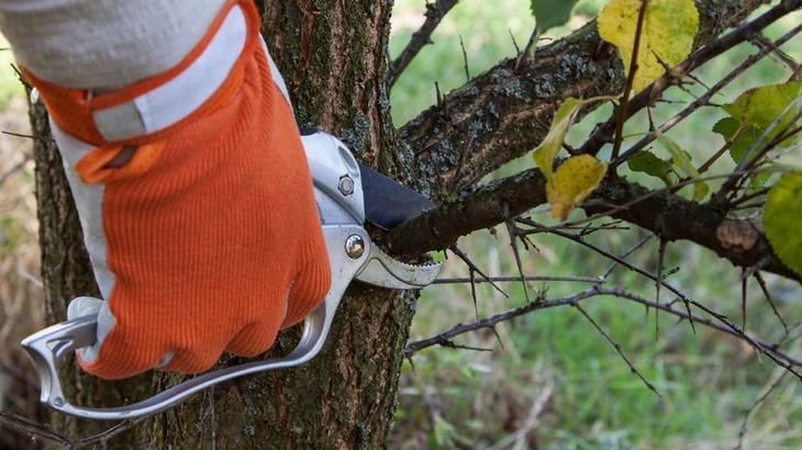 Когда нужно делать обрезку плодовых деревьев осенью