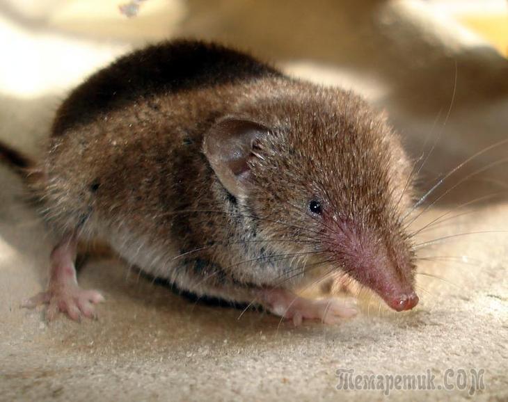 Мыши и мышиные норы в огороде. Как прогнать мышей с огорода
