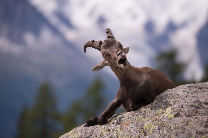Смешные фотографии диких животных 31