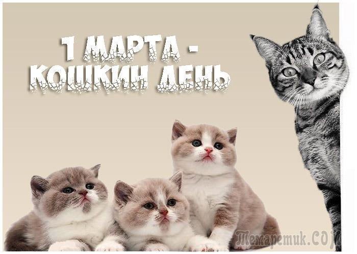 1 марта отмечается День кошек