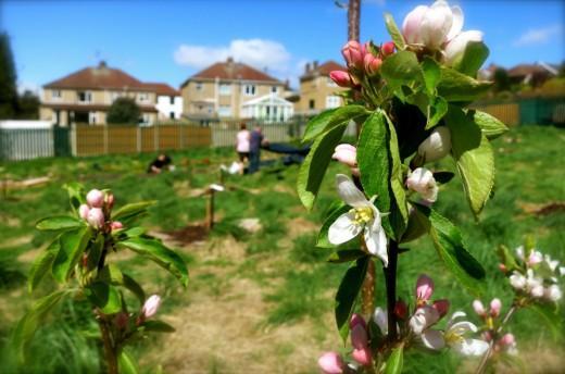 Планировка фруктового сада