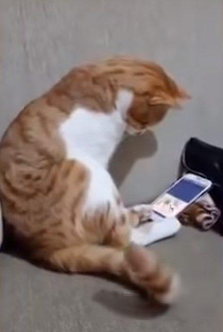 Кот, которому показали видео с погибшим хозяином
