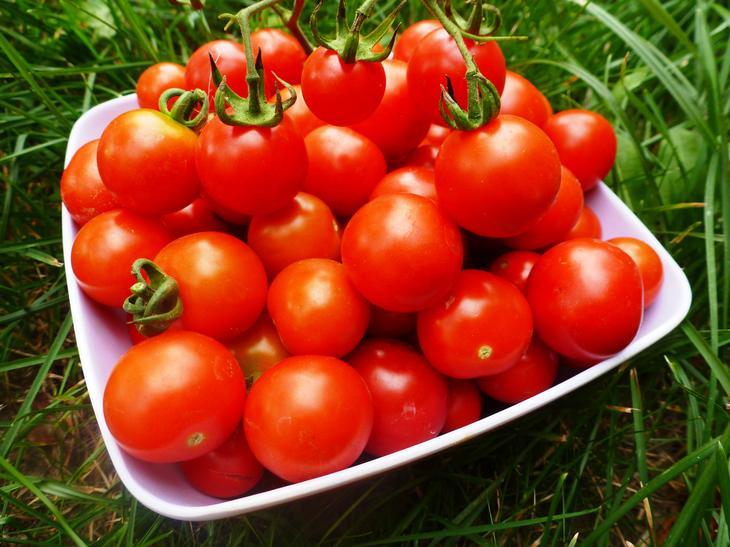 Выращивание помидоров - посадка и уход от А до Я