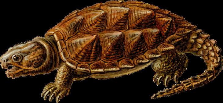 Черепаха Миолания