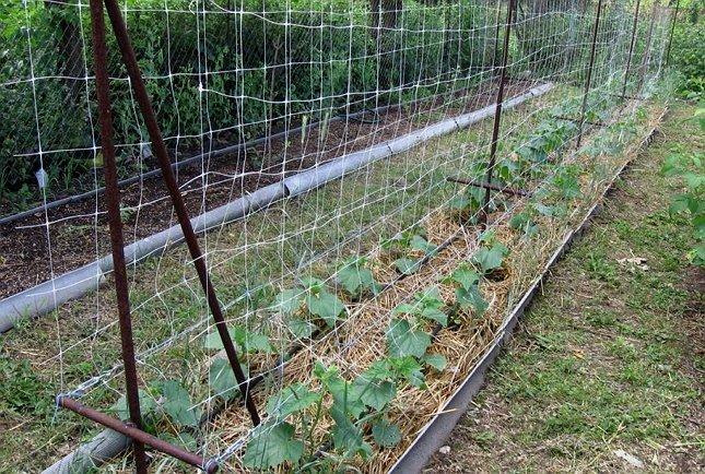 Оригинальные способы выращивания огурцов на малых участках