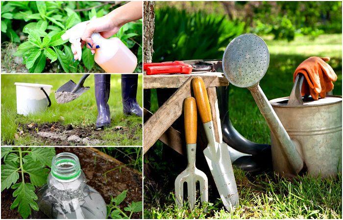 18 полезных советов для сада и огорода