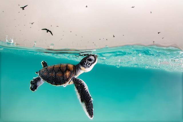 Самые впечатляющие работы финалистов конкурса на лучшую морскую фотографию Ocean Photography Awards 2021