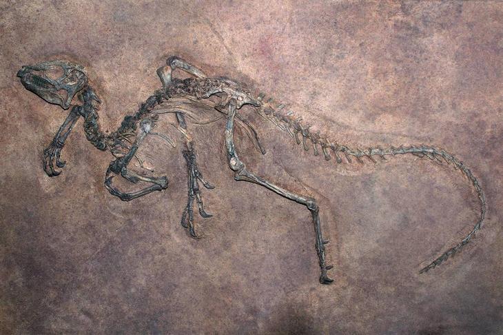 Останки динозавра в древней породе / ©terrain.org