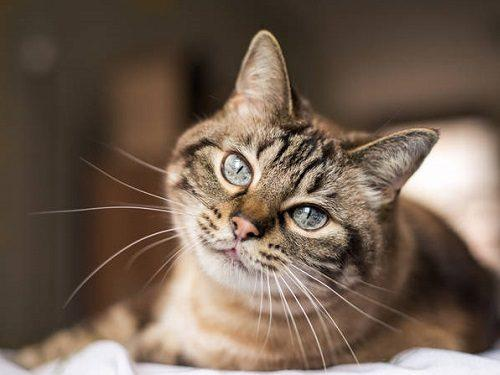 Как кошки лечат и отводят от нас беду