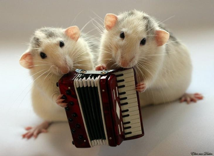 Крысы с аккордеоном. Эллен ван Дилен. Фото