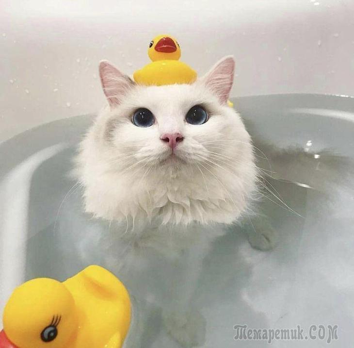 20 котов, которые оказались настолько странными, что залезли в ванну с водой и сели на корточки