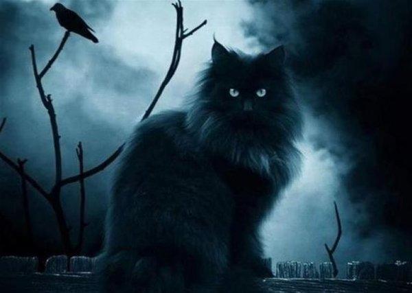 Могут ли кошки видеть ″духов″? Наука говорит, что они слышат ″невидимые″ для нас частоты