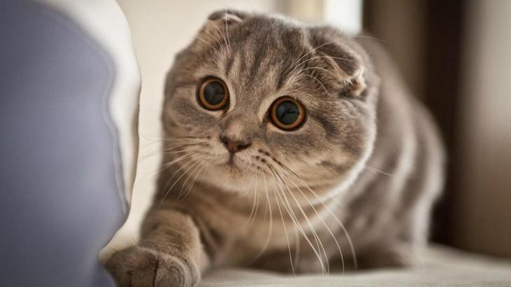Самые милые коты в мире: породы, описание, характеристика, фото