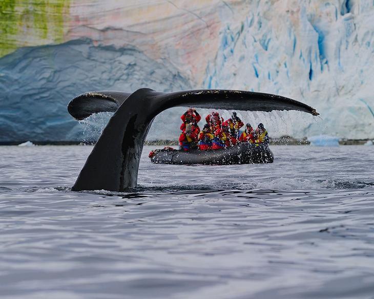 fotografii kitov 29