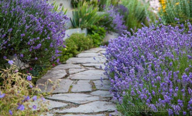 Дизайн садовых дорожек прокладываем тропы