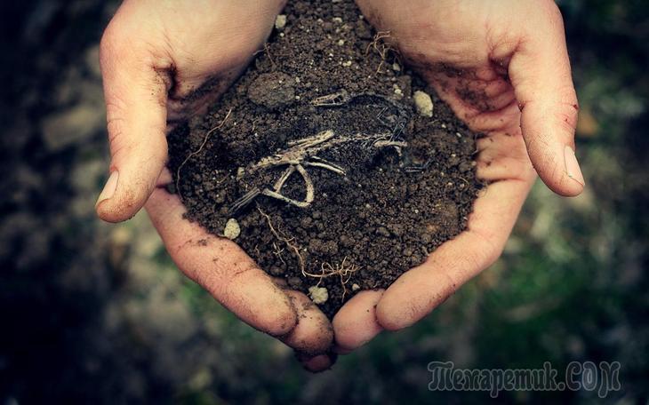 Типы почв и способы их улучшения. как определить качество почвы на участке