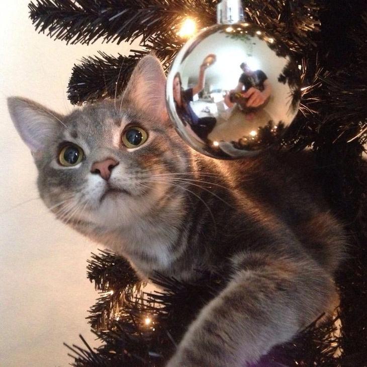 Коты против Рождества, смешные кошки  новогодние ёлки, смешные кошки Новый год