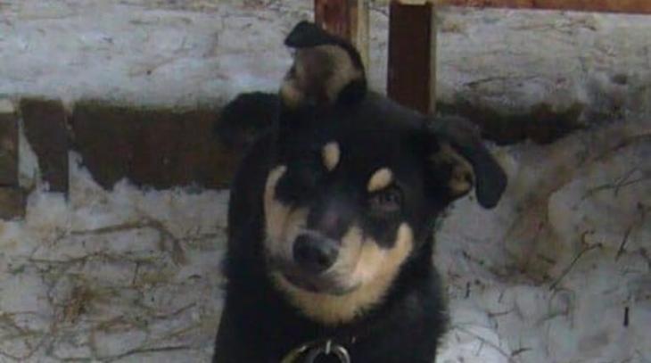 Спасли, усыновили и выгнали из дома, а потом несчастный щенок оказался у бомжа