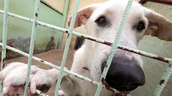 Дума приняла внесенный 8 лет назад закон об обращении с животными