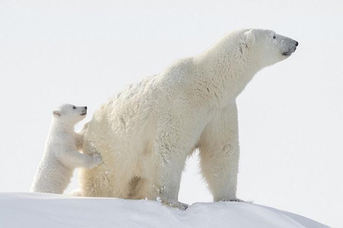 12 фотографий, ради которых фотограф провёл 117 часов на 50-градусном морозе
