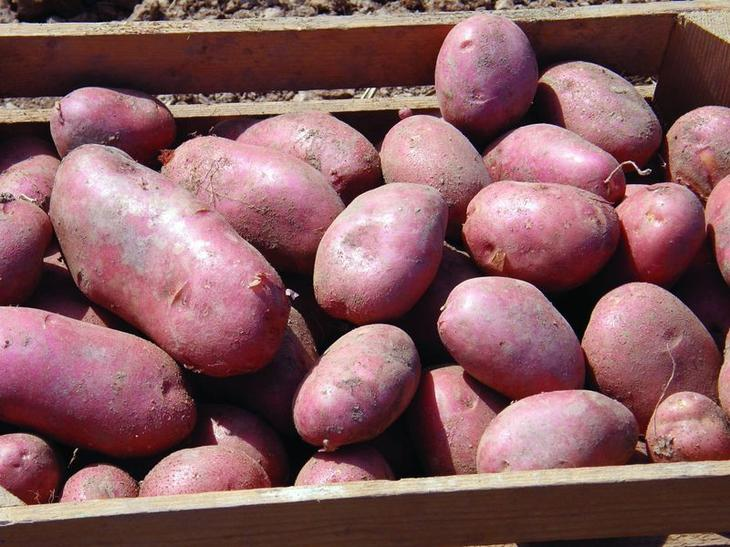 Запеченная картошка с солью + соус, луковый