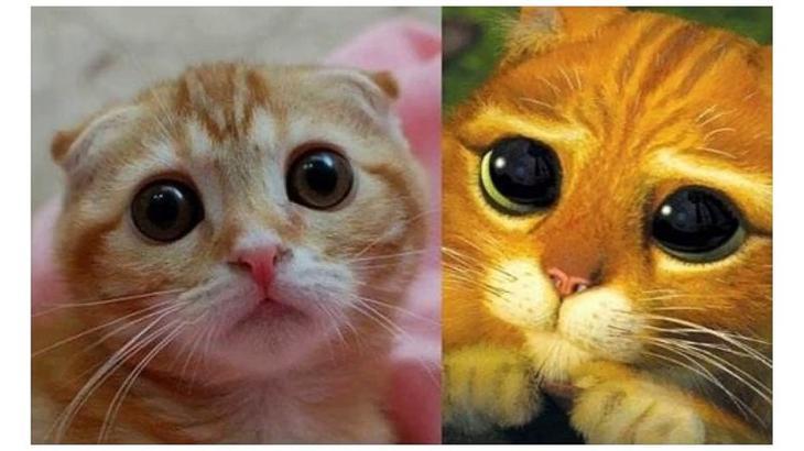 Когда пытаешься соответствовать своему кумиру! до слёз, животные, коты, кошки, питомцы, ржач, смех, юмор