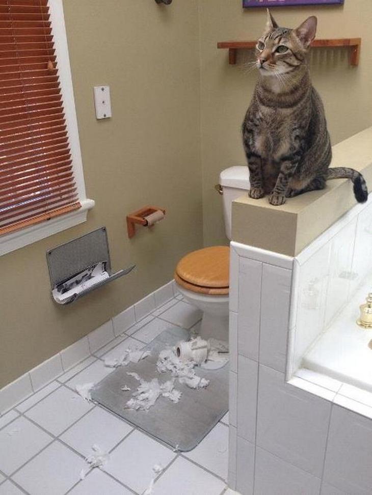Коты абсолютно невозмутимы  животные, интересное, кошки